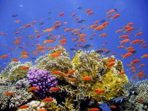 A qué tipo de ecosistema pertenece el arrecife de coral