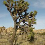Flora del Desierto: [Características de distintas Plantas]