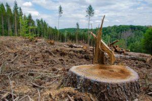 Causas de la pérdida de biodiversidad - La deforestación y la minería