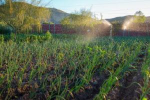 Causas del deterioro ambiental - Desarrollo agrícola y pecuario