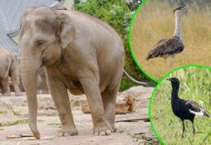 Causas que provocan la extinción de especies - Causa 1