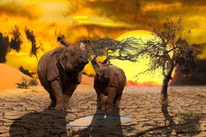 Causas que provocan la extinción de especies - Causa 4