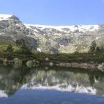 Flora de Clima de Alta Montaña: [Características de distintas Plantas]