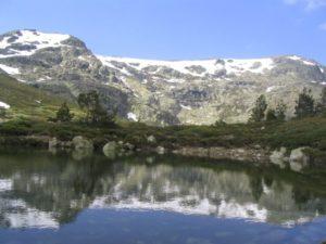 Cómo es la flora de clima de alta montaña