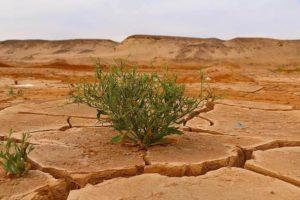 Cómo es la flora de clima desértico