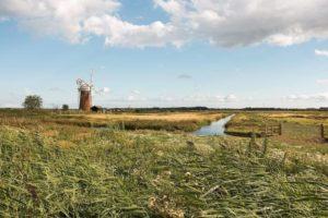 Cómo se está produciendo el deterioro ambiental y qué lo causa