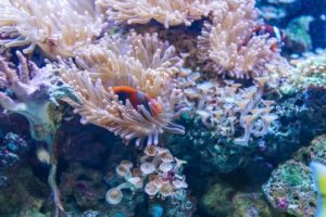 Cómo se forma el arrecife de coral