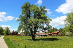 Cómo se transforman los paisajes naturales - Paisaje rural y urbano