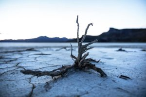 Consecuencias de la pérdida de biodiversidad - Erosión de los suelos