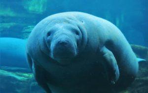 Cuáles son las causas por las que existen animales marinos en peligro de extinción