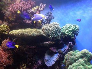 Cuáles son las causas y consecuencias de la pérdida de biodiversidad marina en el mundo