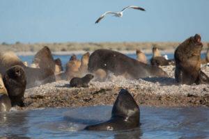 Cuáles son los beneficios del ecosistema marino