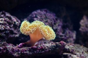 Cuánto oxígeno producen los corales