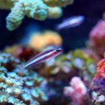 Arrecife de Coral: [Concepto, Ecosistema, Formación y Importancia]
