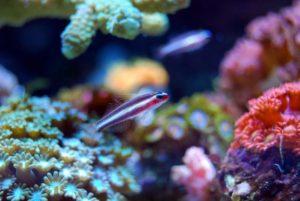Cuánto tiempo viven los corales