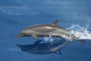 De qué se alimentan los tiburones blancos - Delfín