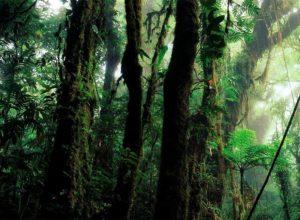 Dónde podemos encontrar el clima de selva