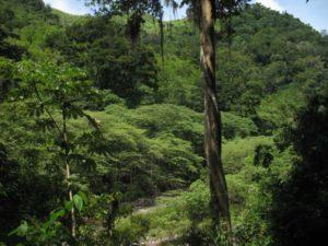 Dónde podemos encontrar el clima tropical húmedo