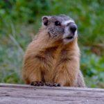 Fauna de Clima de Alta Montaña: [Características de Especies Animales]