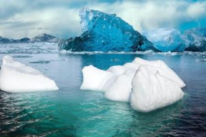 Oso polar en peligro de extinción - El deshielo