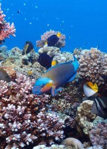 Para qué sirve el arrecife de coral