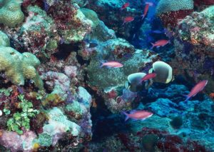 Por qué son importantes los arrecifes de coral