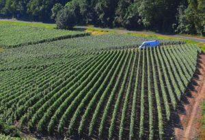 Prosperidad en el sector agrícola