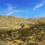 Clima Tropical Seco: [Concepto, Características, Flora, Fauna y Temperatura]