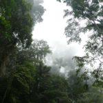 Clima Tropical Húmedo: [Concepto, Características, Flora, Fauna y Temperatura]