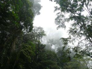 Qué es el clima tropical húmedo