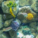 Biodiversidad Marina: [Concepto, Ubicación, Organismos, Beneficios y Preservación]