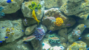 Qué es la biodiversidad marina