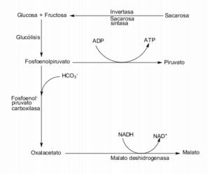 Qué es la glucólisis