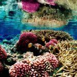 Coral: [Concepto, Desarrollo, Alimentación e Importancia]