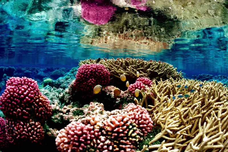 Qué es un coral y cómo se forma