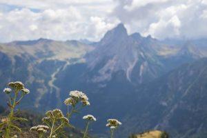 Qué flora tiene el clima de alta montaña