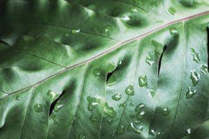 Qué flora tiene el clima tropical húmedo