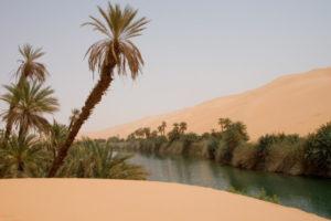 Qué flora tiene el clima tropical seco