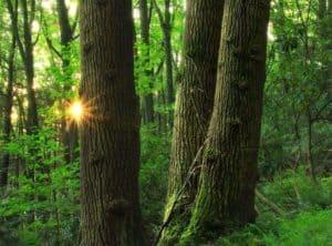 Qué papel tiene el ambiente en la teoría sintética de la evolución