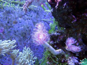 Qué pasaría si no existieran los arrecifes de coral