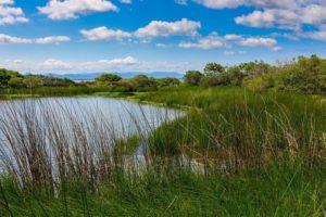 Qué podemos hacer por la conservación de los recursos naturales