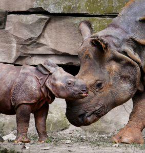 Animales de la sabana - Rinoceronte