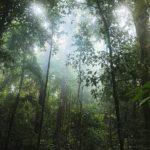 Clima de Selva: [Concepto, Características, Flora, Fauna y Temperatura]