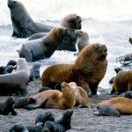 Tipos de Biodiversidad: [Genética, de Especies y de Ecosistemas]