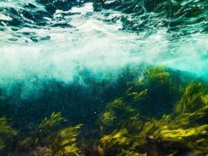 Proyectos para el cuidado del agua - Huertos bajo el agua