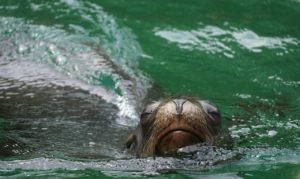 Cuál es el porcentaje de vida marina en el planeta Tierra
