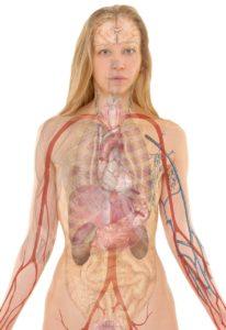 Qué parte del cuerpo contiene más agua