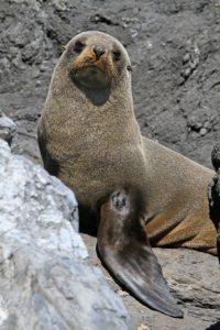 Animales acuáticos en peligro de extinción - Focas