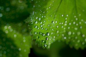 Cuáles son las etapas de la fotosíntesis - Fase oscura