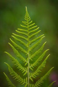 Por qué es importante la fotosíntesis para la vida en el planeta Tierra